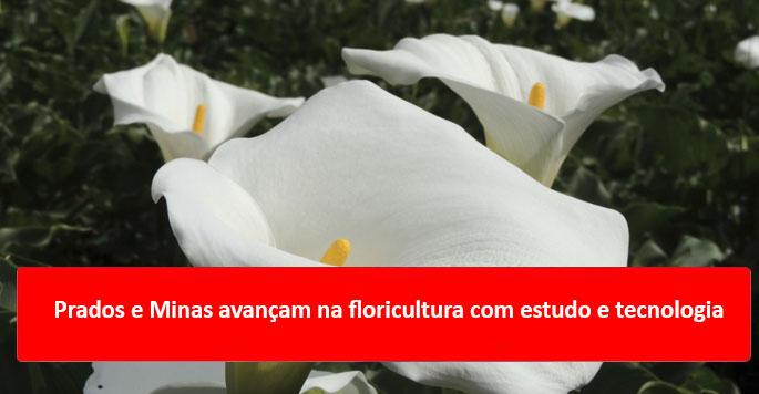 Prados e Minas avançam na floricultura com estudo e tecnologia