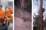 Em Prados, bombeiros capturam ouriço-cacheiro em restaurante