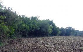 Produtor rural é multado por crime ambiental em Prados