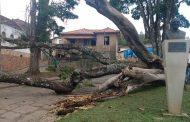 URGENTE: Árvore cai e derruba poste e a fiação no centro de Prados