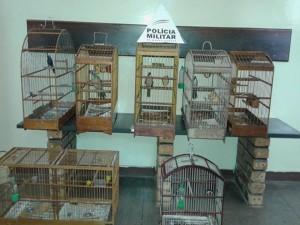 02 aves apreendidas em Conselheiro Lafaiete