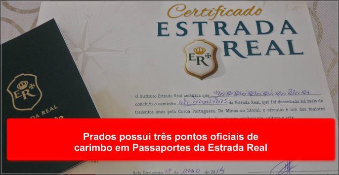 Lembra da jaguatirica atropelada em São Tiago? Ela vai voltar pra natureza!