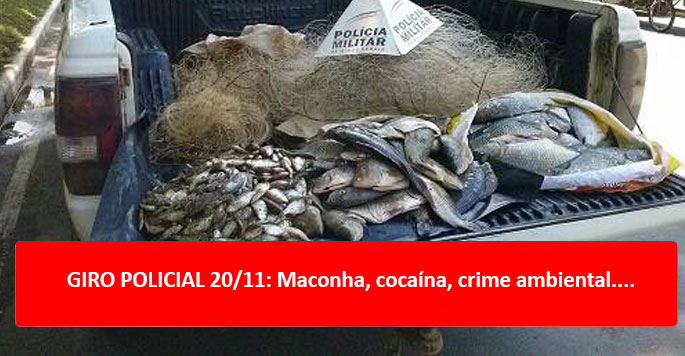GIRO POLICIAL 20/11: Maconha, cocaína, crime ambiental....