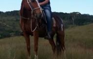 Égua furtada em Prados é encontrada em Santa Cruz de Minas