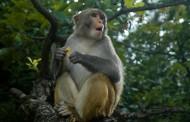 Febre amarela é confirmada em macaco morto na região